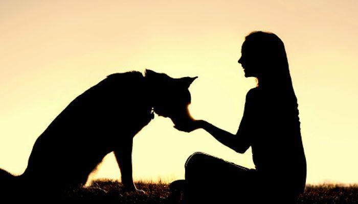 Foto de Cuando los animales lo son todo