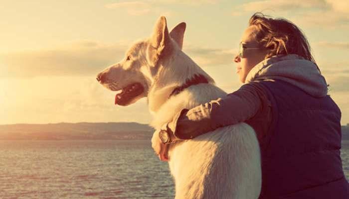 Foto de Mascotas y vida sana: una relación directamente proporcional