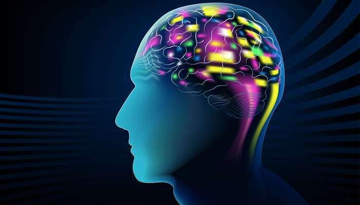 Foto de Tu patrón de actividad cerebral, clave para aprender rápido un segundo idioma