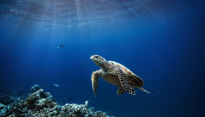 Foto de Voluntariado para proteger a las tortugas marinas