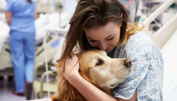 Foto de Los perros, héroes terapeutas de cuatro patas