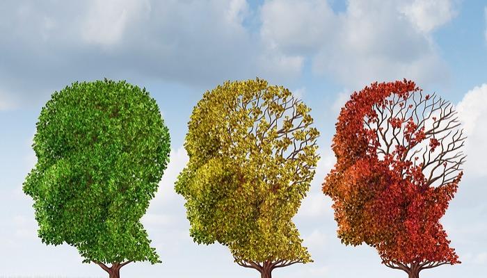 Foto de Conoce qué daña y qué beneficia a tu memoria, según la ciencia