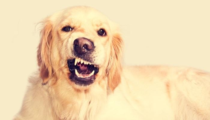 Foto de Un estudio confirma que los humanos podemos entender los ladridos de los perros