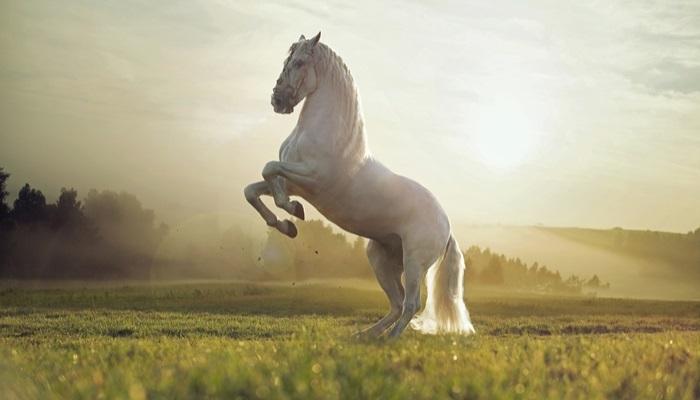 Foto de Rehabilitar una granja con caballos en Eslovaquia: un voluntariado diferente
