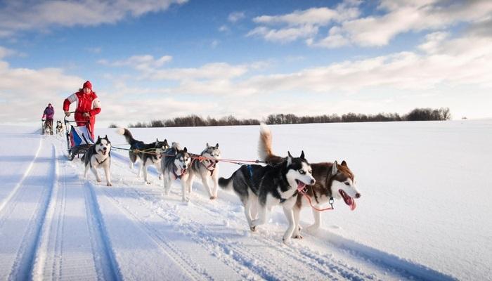 Foto de Noruega busca  guías de trineos con perros internacionales