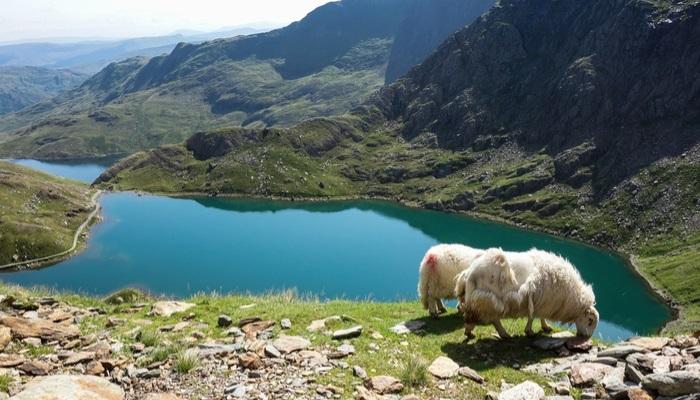 Foto de Se buscan voluntarios para promocionar un campamento de Gales en plena naturaleza