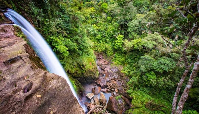 Foto de Una oportunidad de voluntariado en el Amazonas colombiano