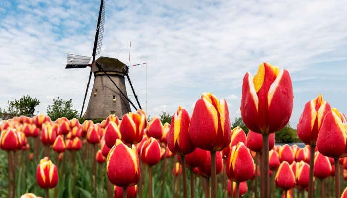 Foto de Becas para doctorados relacionados con la ecología en Holanda