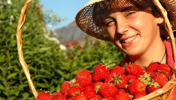 Foto de Casi 12.000 puestos de trabajo para la recolecta de la fresa en Huelva