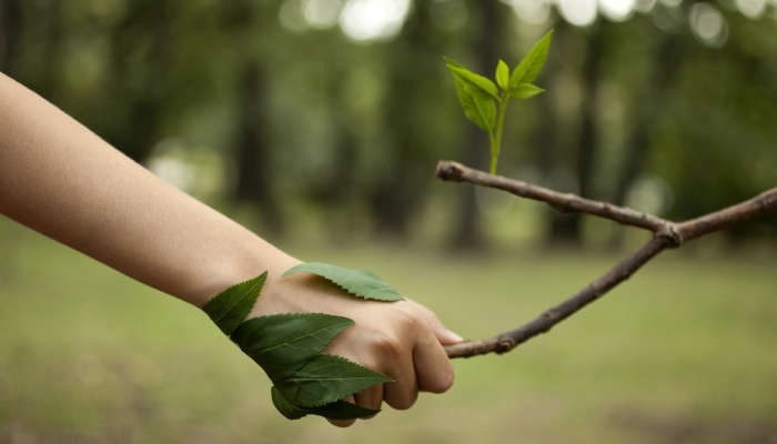 Foto de ¿Con qué trabajos puedes ayudar al planeta?