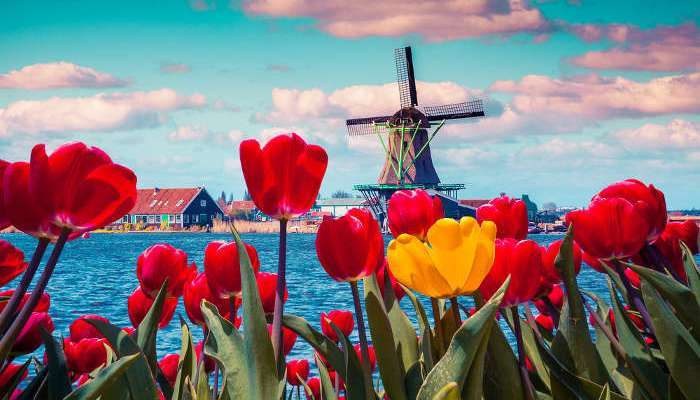 Foto de Becas en Holanda para maestrías