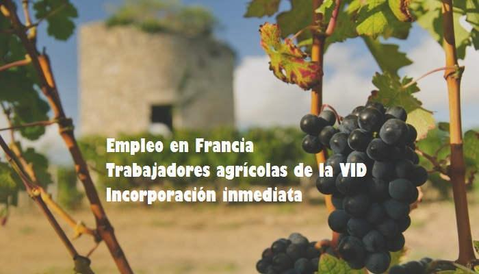 Foto de Oferta de empleo para trabajar en el cultivo de la vid en Francia