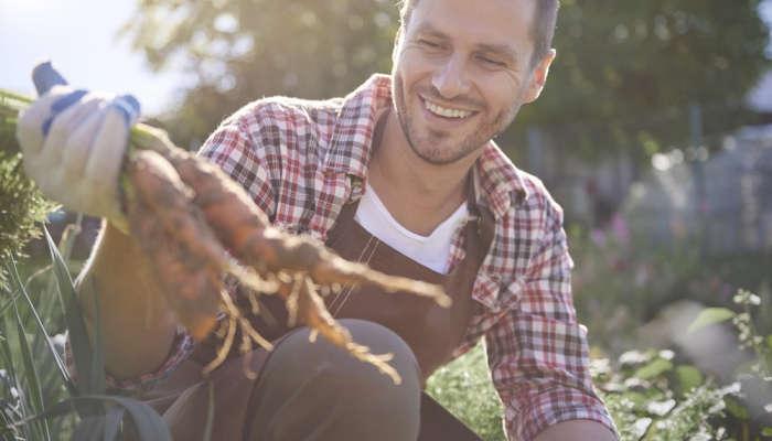 Foto de Trabajo en la campaña de la zanahoria y la fresa: se buscan recolectores en Cádiz y Huelva