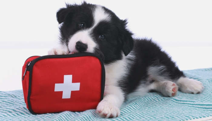 Foto de Cómo mejorar la vida de tu perro o gato: Curso de Cuidados y Primeros Auxilios