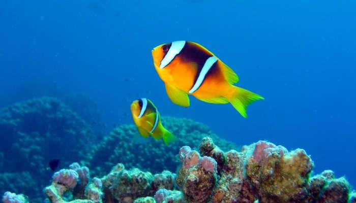 Foto de Vacunación de peces: una oferta de trabajo a contracorriente