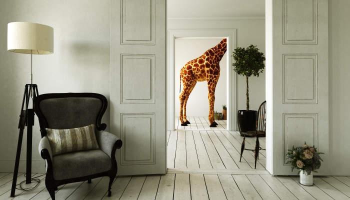 Foto de Se buscan decoradores para encajar diseño y estilo en todos los ambientes