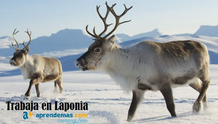 Foto de Trabaja en Laponia: cómo acceder a un empleo en la tierra de Santa Claus
