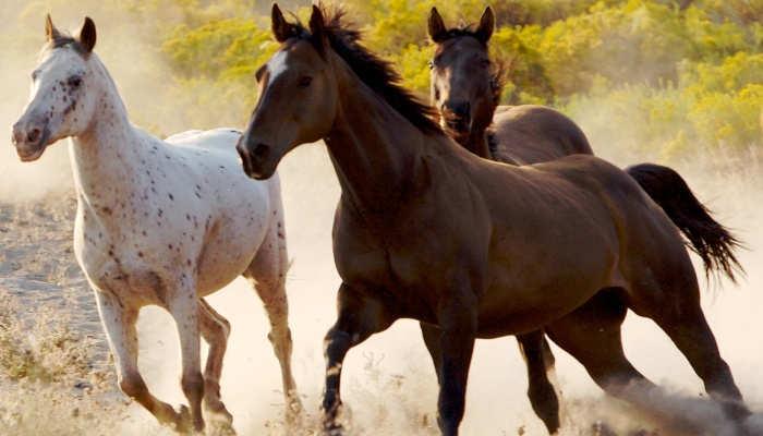 Foto de Trabajar con caballos: vacantes como guía, monitor y en el hipódromo