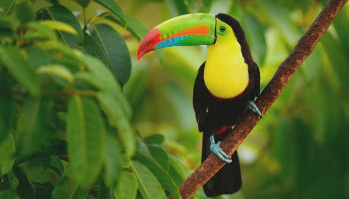 Foto de De voluntariado a Costa Rica: pura vida