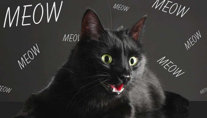 Foto de Vocabulario espeluznante en inglés no sólo para Halloween