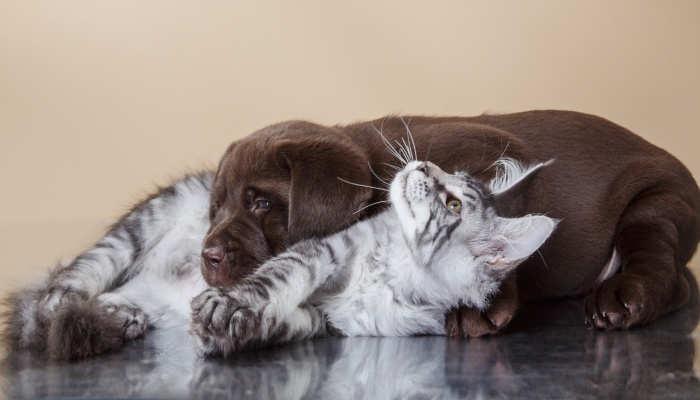 Foto de Curso especializado en cachorros: cuando formación y ternura se dan la mano