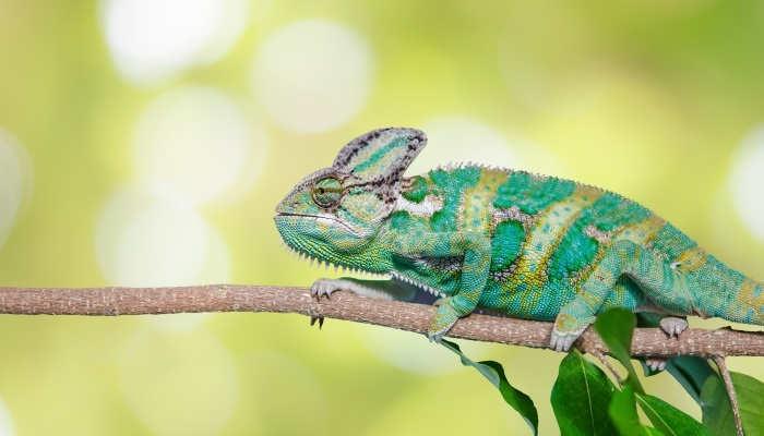 Foto de Curso de animales exóticos: aprende su cuidado y peculiaridades