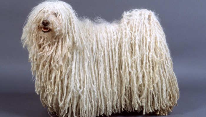 Foto de Peluquería canina: un curso para dominar el estilo de todas las razas