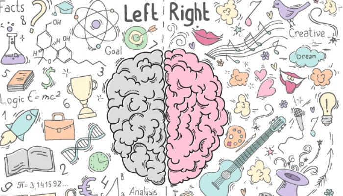 Foto de Determinan por qué el hemisferio derecho del cerebro es clave al iniciarse en un nuevo idioma