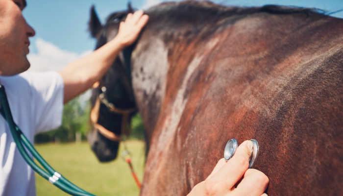 Foto de Cómo formarse para trabajar con caballos: de hípicas a laboratorios
