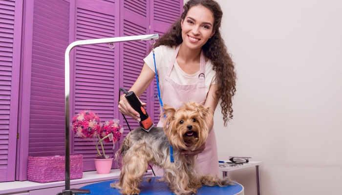 Foto de Peluquería canina: un curso para los amantes de perros más presumidos