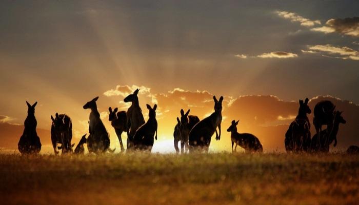 Foto de Llegan becas para estudiar en Australia