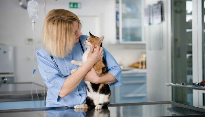 Foto de Cómo ser Auxiliar de clínica veterinaria: la formación que necesitas para trabajar con animales