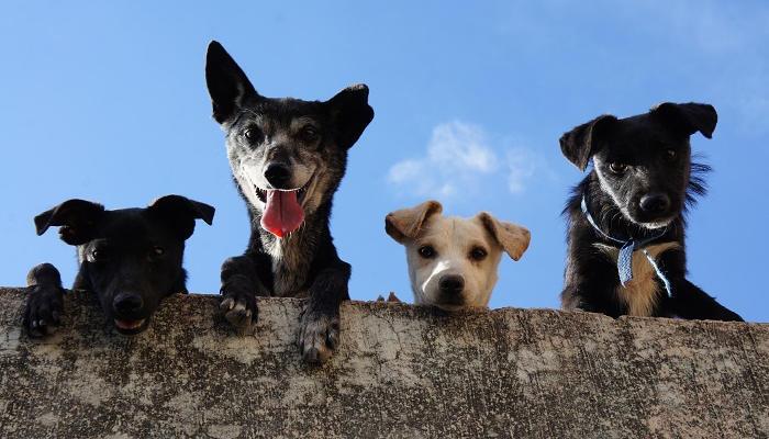 Foto de Los mejores cursos de formación para trabajar con animales