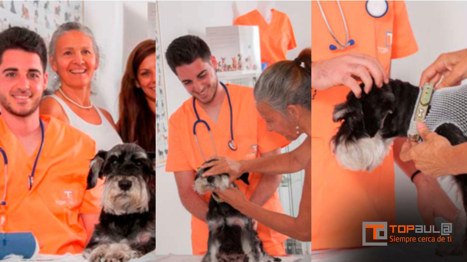 Curso de auxiliar técnico veterinario